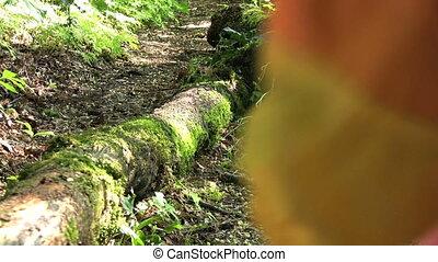 Little Girl Jumps Over Log