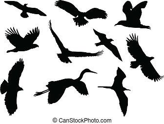 Birds silhouette collection - vector