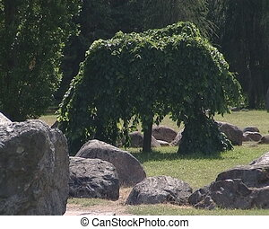 Small tree with lush foliage branches surrounded by stones....