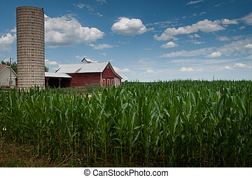 Cornfield and Barn - View of a red barnfrom a cornfield Fort...