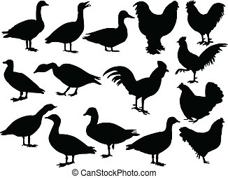 farm-birds - vector - illustration of farm-birds - vector