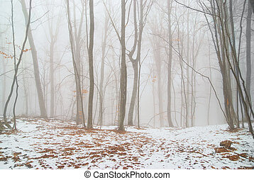 Winter forest - Winter snowy forest in the dense fog.