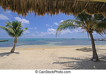Belize San Pedro - Picture of a beach and palm trees in San...
