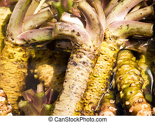 Wasabi root - Fresh wasabi root at the japanese market.
