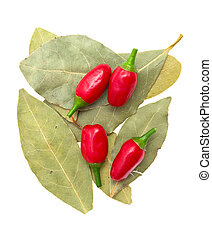 laurel leafs, hot pepper  on white background