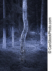 Birch tree in spooky forest - Trunk of birch tree in spooky...