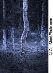 Birch tree in spooky forest - Trunk of birch tree in spooky...