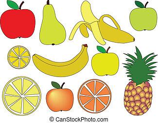 fruit - vector