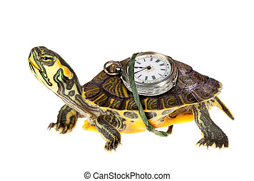 Running against the time - Funny green turtle with a...
