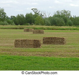 Square hay bails in a field