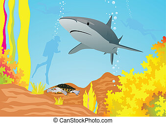 Shark and divers - Underwater landscape The shark swims in...