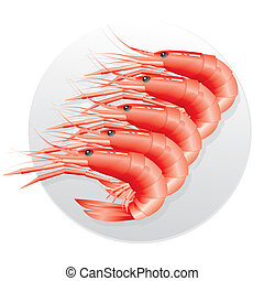 some shrimps on a white background - shrimp Suborder...