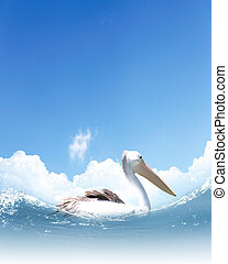 Picture of white pelican swimming on wavy water