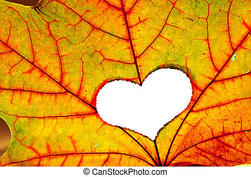 Autumn leaf with a hole in shape of heart - Autumn maple...