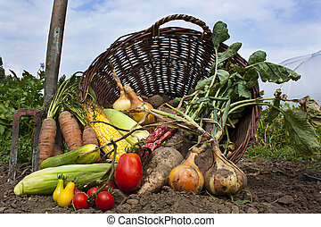 A harvest of seasnon vegetables spilling from a wicker...