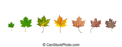 life cycle of leaf - Different stages of life of a leaf...