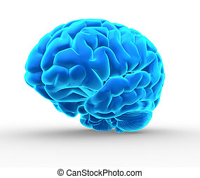 Blue brain - Conceptual image of a blue brain over white -...