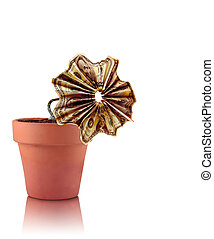 Economic Crisis - A flower made out United States currency...