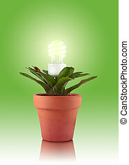Eco plant - A flower pot with a green bromeliad plant that...