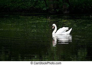 天鵝, 航行, 湖, 森林