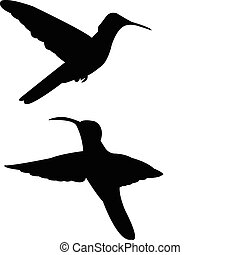 Humming bird silhouette - vector