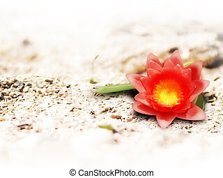 red flower in the sand