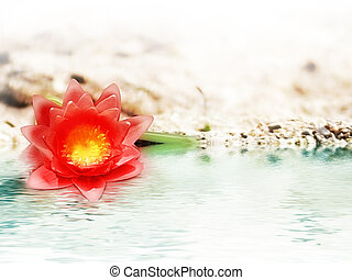 survivor - red flower in the sand near the water