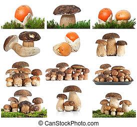 gombák, kollázs