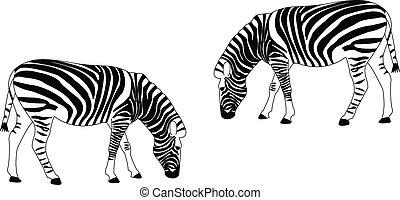 zebras - vector