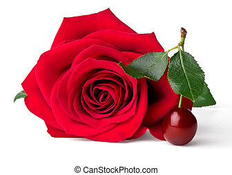 Velvet red rose and cherry isolated on white background