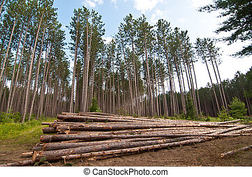 Stacked Tree Trunks - Tree trunks are stacked in a pile...
