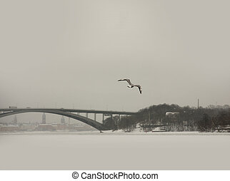 Seagull in winter