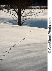 Animal tracks in snow - Animal tracks in untouched snow on...