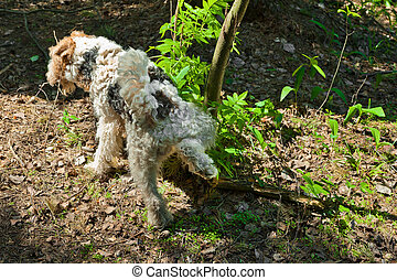 dog peeing - Cute dog peeing on plants