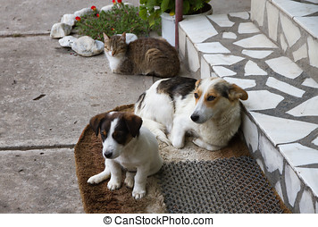 Two dogs and one cat - Two dogs and a cat having rest in...