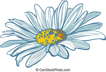 chamomile - color image of the flower of white color...