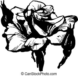 gorgeous rose bud black and white drawing sketch