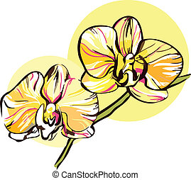 two orchid with a yellow middle picture