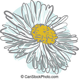 chamomile - color image of the flower of white color