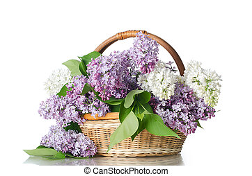 Beautiful lilac isolated on white background - The beautiful...
