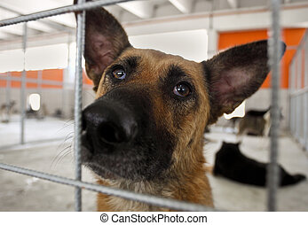 Homeless dog shelter - Close-up of homeless dog in a...