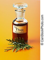 Thuja Occidentalis plant and extract