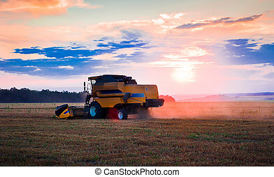 combine in the field of wheat