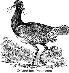 Great Bustard Otis tarda, vintage engraving - Great Bustard...