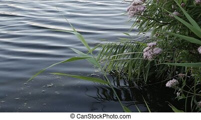 Reeds and flowers by a river.