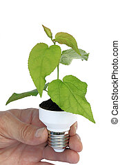 plant in a base of energy-saving bulb