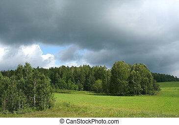 Storm weather - Birch forest and storm clouds. Photo taken...