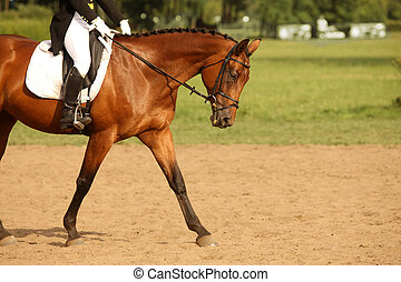Walking horse - A picture of an equestrian on a sorrel horse...