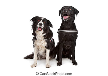 Border collie and a black dog