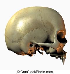 Vampire Skull Side View